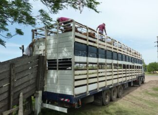 Cese de comercialización de carne vacuna